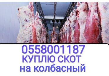 Куплю скот на колбасный звоните в любое время