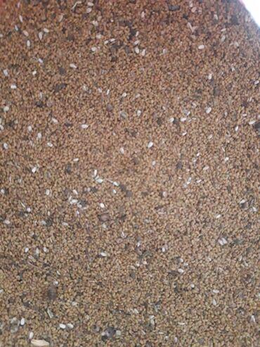 Все для дома и сада - Сокулук: Семена люцерна клевера не очищенные есть в наличии 250 кг