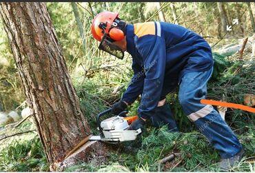 Пилю деревья дрова г. Кант