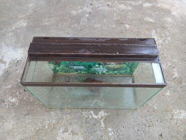 Akvarium satilir qirigi çati yoxdur ustunde tempratur verilir