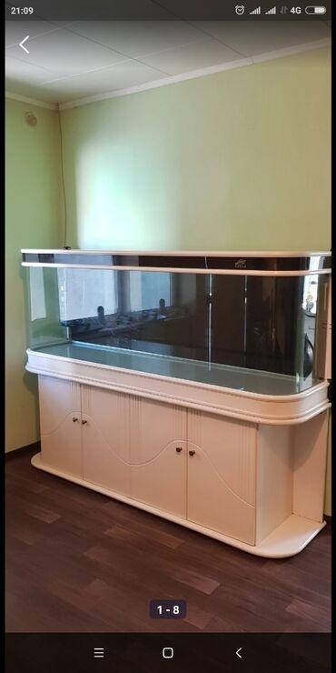 рыбки в Кыргызстан: Продам шикарный аквариум(700 литров) вместе с рыбками.Аквариум в