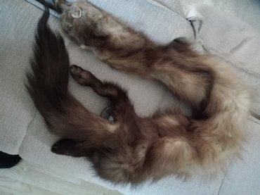 lisica za oko vrata - Krusevac