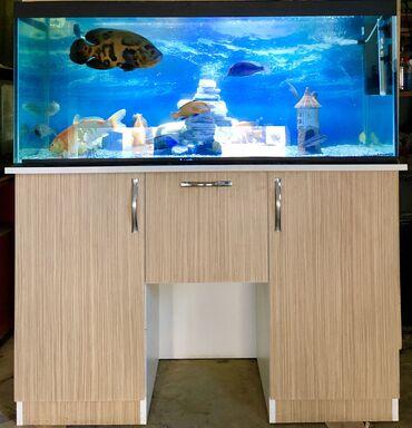 audi tt 18 tfsi - Azərbaycan: Akvarium satilir 300 litrlik . tam ideal veziyyetde deyerinden çox