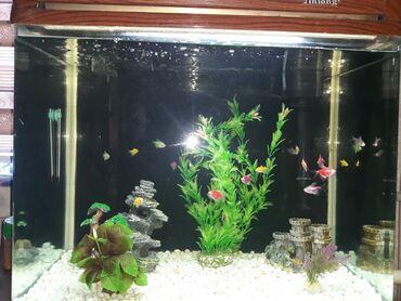 760 объявлений: Продаю заводской аквариум с тумбой на 90 лит