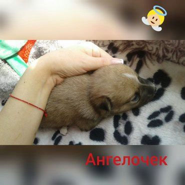 Ищем дом сладким малышам! в Бишкек
