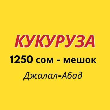 ворота джалал абад в Кыргызстан: Жүгөрү үрөнү Жалал-Абадда!! Семена кукурузы. Продаю семена кукурузы в