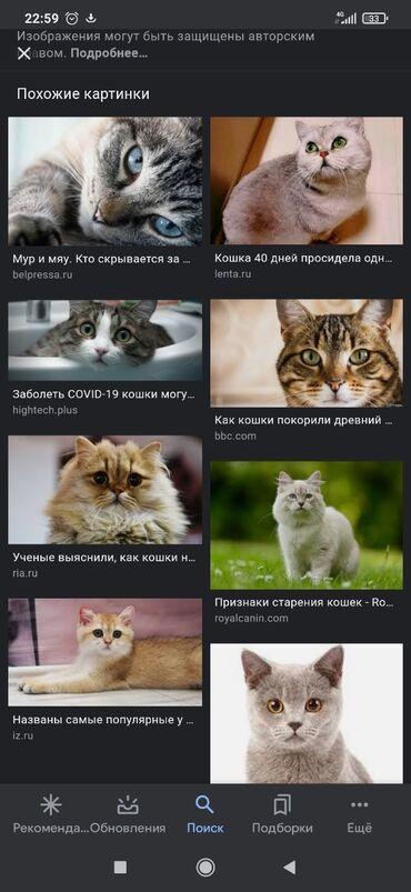 Коты - Кыргызстан: Возьму котёнка. срочно желательно мальчика красивый игривый звонить
