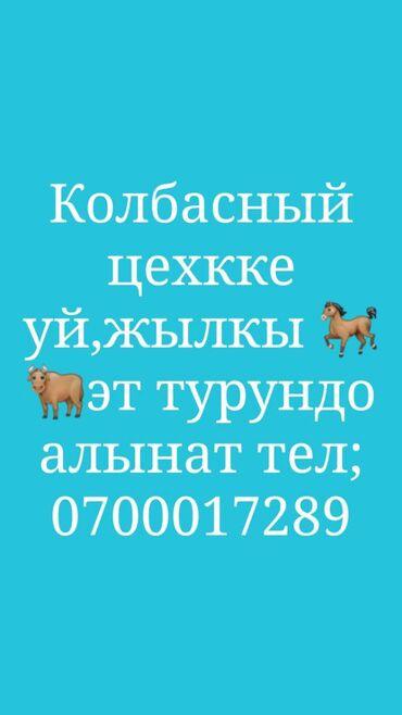уй було жана тошок сырлары в Кыргызстан: Колбасный цехкке Уй жылкы эти алынат келишим баада Бишкек токмок
