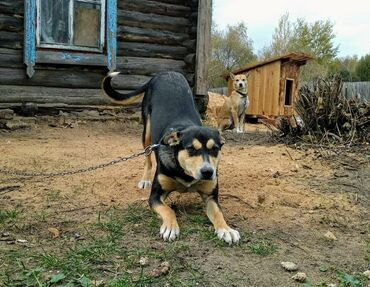 даром животные в Кыргызстан: Приму Даром Кормим животных и птиц. С благодарностью примем старые