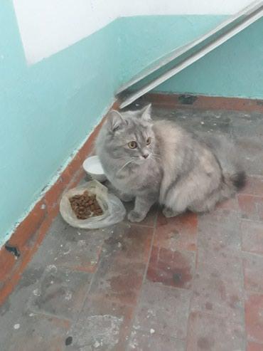 Отдадим кошечку в добрые, заботливые в Бишкек