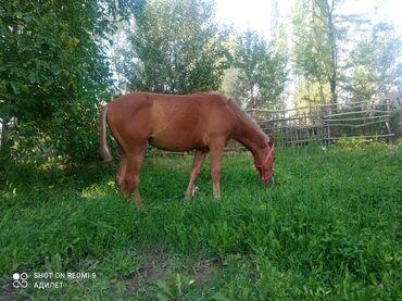Животные - Кызыл-Суу: Лошади, кони