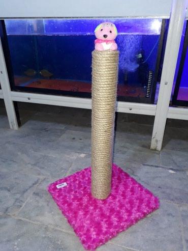 Bakı şəhərində Pishiklerin oynamasi ve dirnaqlarin temizlenmesi ucun 50 sm