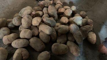 51 объявлений: Картошка, сорт пикас