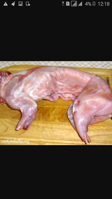 Продаю мясо кроликов в Бишкек