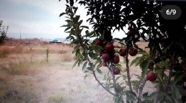 Продажа земельных участков в Кыргызстан: Продам 5050 соток Для бизнеса от собственника