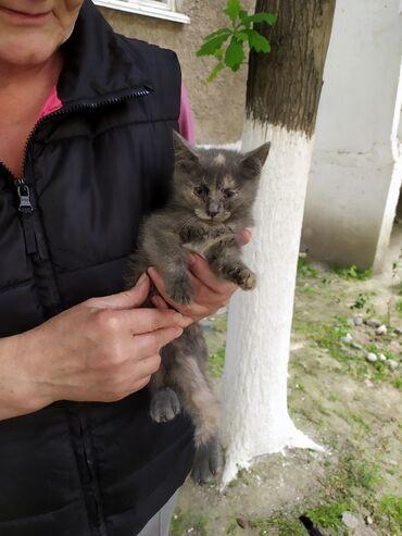 Отдам в хорошие и добрые руки котят есть: три черных два серых и один