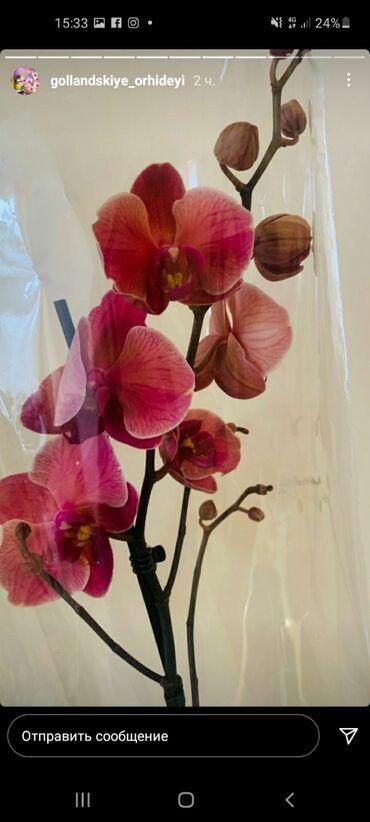 Орхидея!!!!!!орхидея