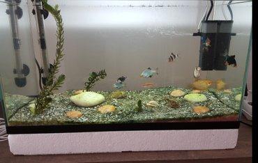 Akvarijum sa 10 ribica, stiropor, pumpa za prečišćenje  vode i dovod k - Beograd