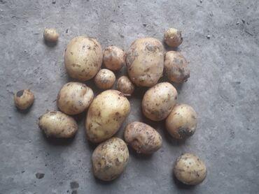 Продукты питания - Теплоключенка: Продаю свежую картошку