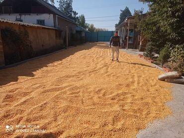 Продаю кукурузу