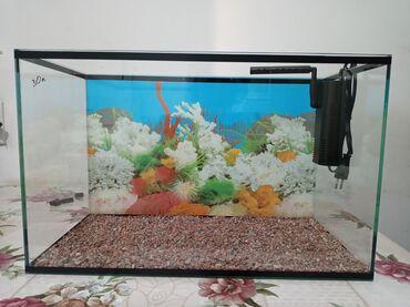 Продаются аквариумы разных размеров