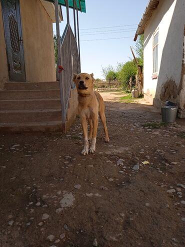44 объявлений | ЖИВОТНЫЕ: Собаки