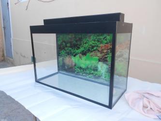 Bakı şəhərində 60 litrelik akvarium teze