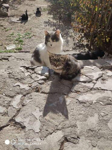Друзья котята ищут новый дом добрый любящий дом. малышам 2. 3