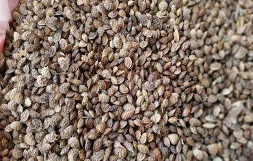 37 объявлений: Эспарцет урон, урук сатам 6 тонна.Семена эспарцета 6 тонн