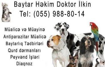 Bakı şəhərində Baytar Həkim-Veteriner Xidməti
