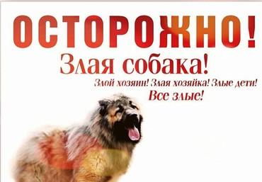 Надомница - Кыргызстан: Размещение рекламы | Лайтбоксы, Таблички | Над дорогой, На тротуарах, На ограждениях, заборах
