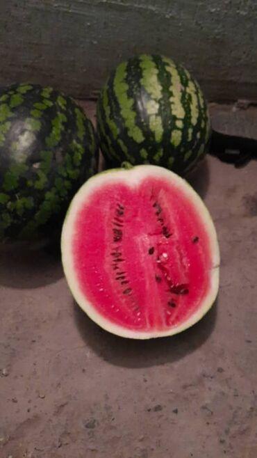 23 объявлений: Продаю семена арбуза холодок в большом количестве