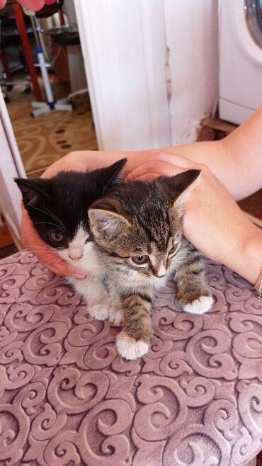 2694 объявлений: Отдам котят в добрые руки! 2х месячные