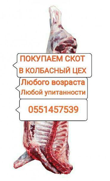 802 объявлений   ЖИВОТНЫЕ: Покупаем скот на мясо и вынужденный забой в колбасный цех.только