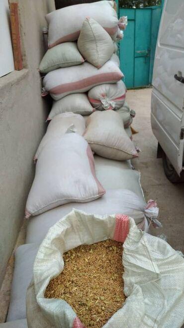 Животные - Полтавка: Продаю 4 тонны пшеницы. В Кара балте. Урожай 2021 г. Цена окончательна