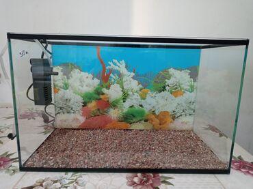 Срочно продаю аквариум 30л