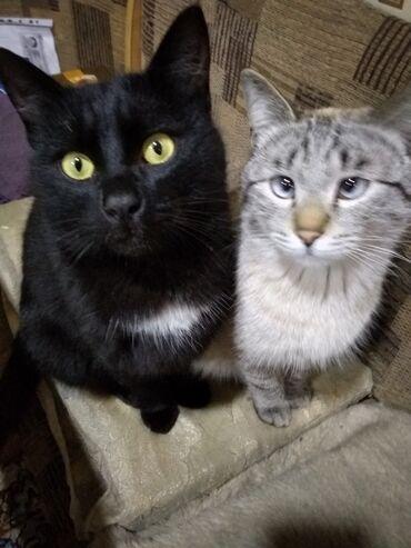 Отдам даром таких хороших котов им год обращаться по номеру