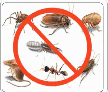 Бытовые услуги в Кыргызстан: Дезинфекция тараканов,клопов,бактерий,микробов,а также COVID-19