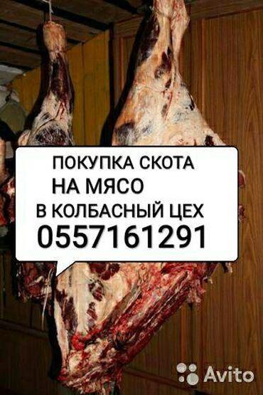 Принимаем в колбасный цех: коров быков тёлок и лошадей а также