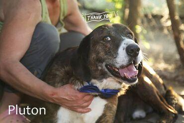 Pas - Srbija: Udomljava se PlutonPluton je godinama deo složne porodice Dobre nade