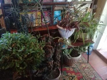 Продаю все цветы   в Бишкек