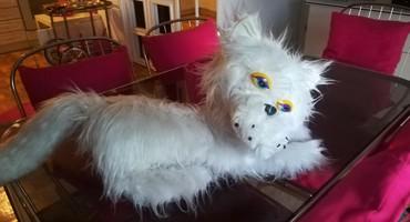 Hkosulja-cm - Srbija: Velika bela lupava mačka, dužina 90 cm
