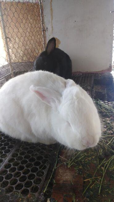 Продаю кроликов. Витаминный и минеральный составмясакроликов