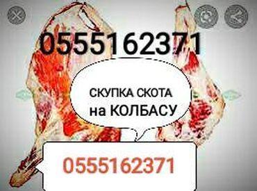 Бараны романовской породы купить - Кыргызстан: Куплю | Коровы, быки, Козы, козлы, Лошади, кони | На забой, на мясо