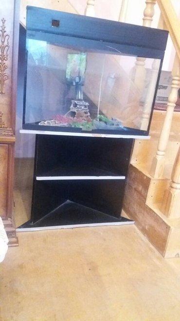 Bakı şəhərində Угловой аквариум. 50 азн продается срочно.Есть все аксесуары