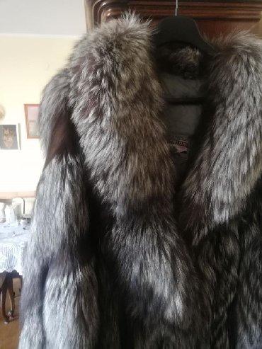 Polarna lisica - povoljno