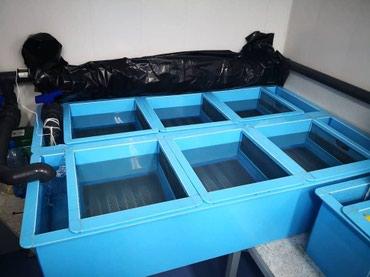 жесткий д в Кыргызстан: Инкубационные лотки используются для инкубации икры форели, частиковых