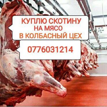купить постельное белье для гостиниц в розницу в Кыргызстан: Куплю скот любой упитанности на мясо
