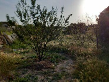 audi a4 3 tiptronic - Azərbaycan: Satılır 3 sot vasitəçidən