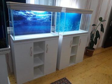 Bakı şəhərində Mebeli ile birlikde teze hazirlanip akvariumlar